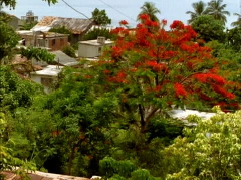 vidéos et rushes de ms, ha, houses among trees, nuevitas, cuba  - angle de prise de vue