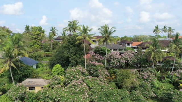 AERIAL WS Houses and palm trees in village, Campuhan, Ubud, Bali, Indonesia