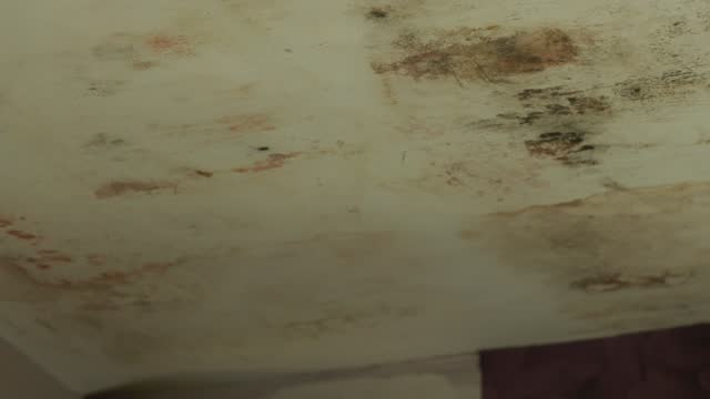 housing ombudsman releases damning report triggered by itv news investigation; england: london: lewisham: int various shots of mould on ceiling in... - itv lunchtime news stock videos & royalty-free footage