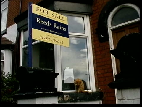 bank of england itn for sale sign outside house cat sitting on window cleaning itself in b/g 'for sale' signs - for sale englischer satz stock-videos und b-roll-filmmaterial