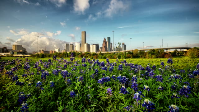 Houston Bluebonnets