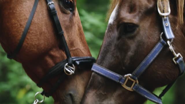 """vidéos et rushes de comment les chevaux disent """"je t'aime"""" - accouplement cheval"""