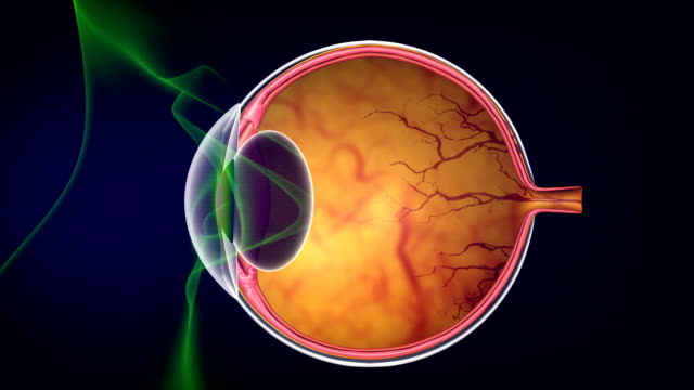 how human eyes work - optical instrument stock videos & royalty-free footage