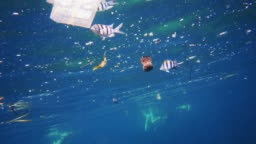 How microplastic enters the food chain - fish eating plastic bag in the ocean