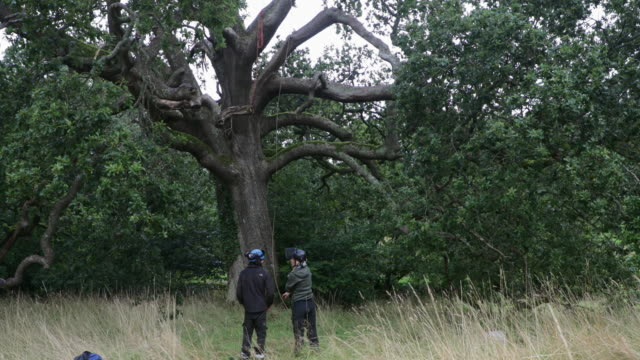 vídeos de stock, filmes e b-roll de como devemos abordar esta árvore? - forester