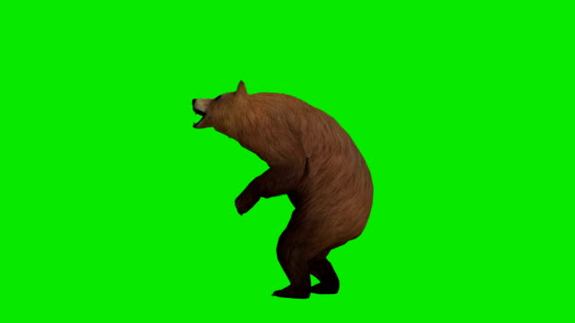 howling bear green screen (loopable) - bear stock videos and b-roll footage