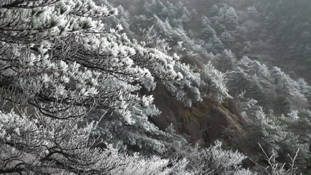 huangshan mountain in winter,china. - pine tree stock videos & royalty-free footage