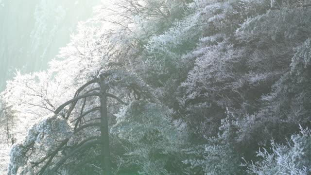 冬には、中国の黄山。 - 松の木点の映像素材/bロール