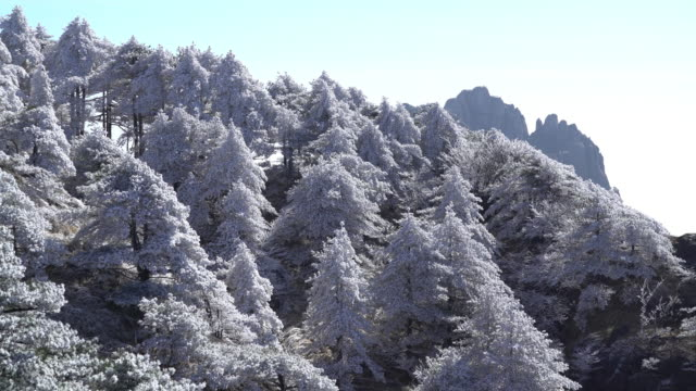 vídeos de stock e filmes b-roll de huangshan mountain in winter,time lapse. - pinheiro