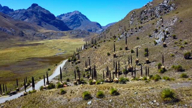 huascaran park, ancash, perù - peruviano video stock e b–roll
