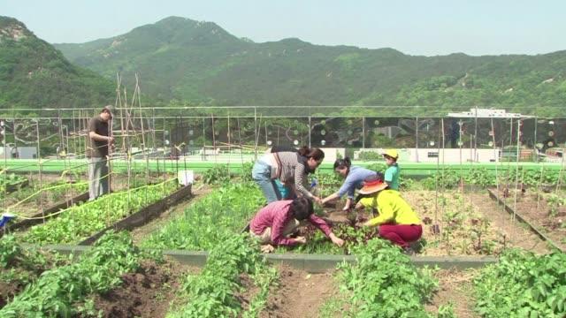 Huertos jardines verdes impecables y parques florecen en las azoteas de los rascacielos de Seul donde aportan color y espontaneidad a una de las...