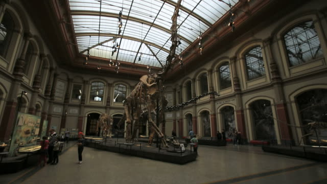 huge dinosaur at berlin natural history museum - museum stock videos & royalty-free footage