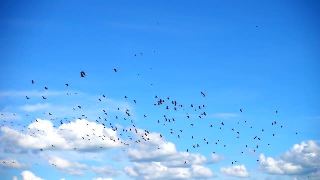 slo mo - huge flock of birds flying with cloudscape - bird stock videos & royalty-free footage