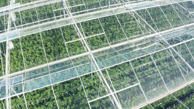 aerial huge greenhouse for growing tomato - greenhouse stock videos & royalty-free footage