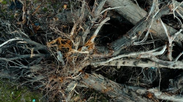vidéos et rushes de énorme tas d'arbres abattus - écorce
