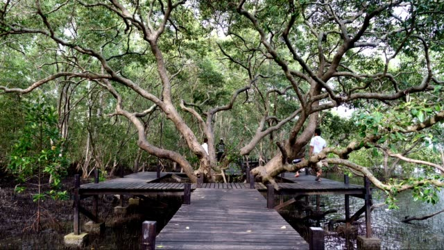 a huge mangrove field of thung prong thong forest in rayong at thailand - treaty stock videos and b-roll footage