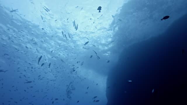 huge school of fish at roca partida - roca video stock e b–roll