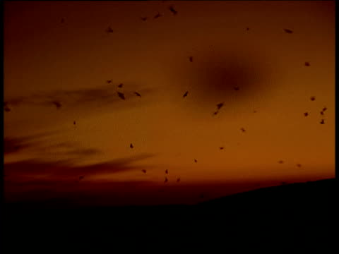 huge swarm of bogong moths silhouetted against sunset sky, bogong national park - moth stock videos & royalty-free footage