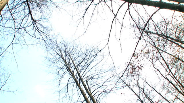 HD: Hugging A Tree