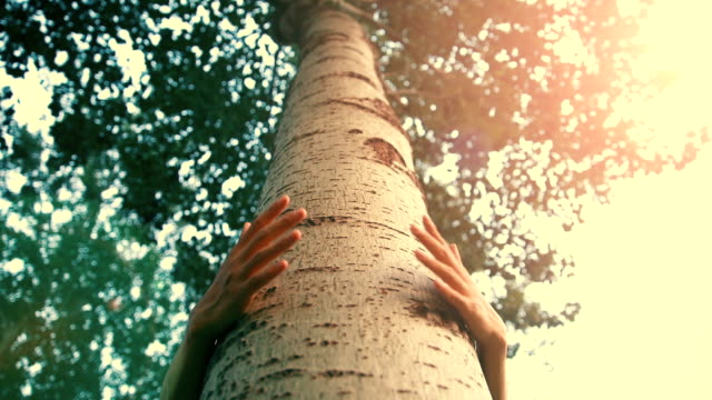huging a tree - hugging tree stock videos & royalty-free footage