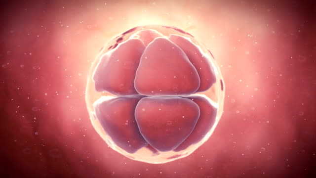 human 8-cell embryo - human fertility stock videos & royalty-free footage