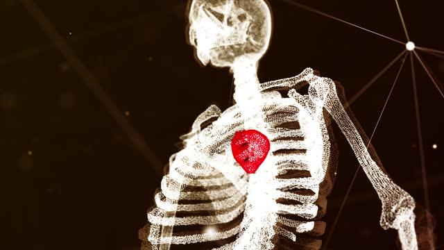 4k mänsklig anatomi och hjärtdetaljer bakgrund - människonjure bildbanksvideor och videomaterial från bakom kulisserna