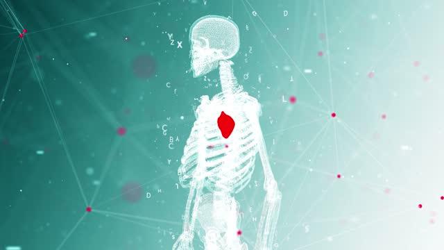 4k mänsklig anatomi och hjärta detalj bakgrund - zooma ut - människonjure bildbanksvideor och videomaterial från bakom kulisserna