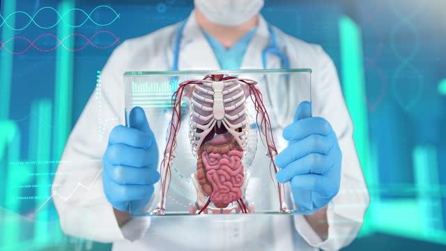 human anatomy examining - 4k resolution - human digestive system stock videos & royalty-free footage