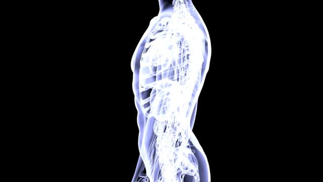 human anatomy - human vertebra stock videos and b-roll footage