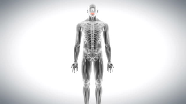 Human atlas bone