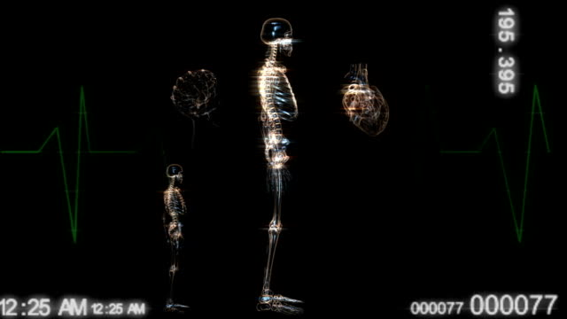 human body and parts x ray animation - skeleton sled stock videos and b-roll footage