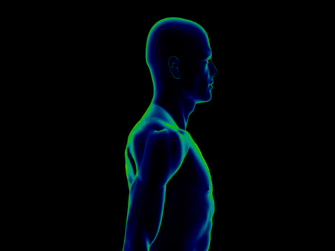 human body of a man for study - human muscle stock videos & royalty-free footage