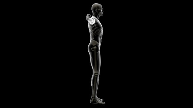 human body of a man with skeleton for study - human muscle stock videos & royalty-free footage