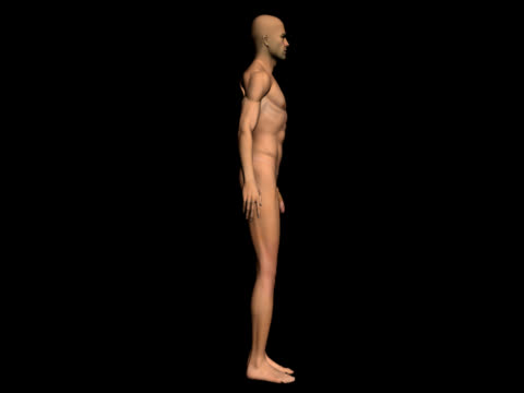 Human body of a realistic man for study - Spinning