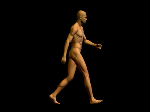 human body of a realistic man for study - walking - deltoid stock videos & royalty-free footage