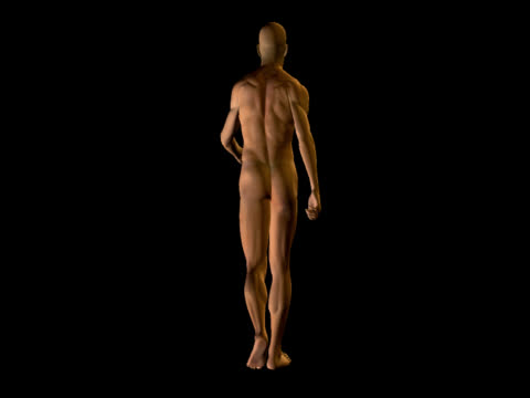 stockvideo's en b-roll-footage met human body of a realistic man for study - walking - anatomie
