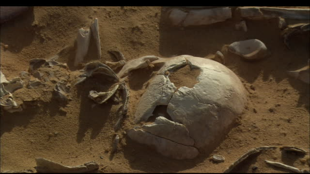 human bones lie partially covered by sand at an archaeological dig. available in hd. - human bone stock videos & royalty-free footage