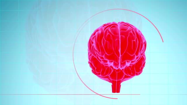 vídeos de stock, filmes e b-roll de sumário do cérebro humano - telencéfalo