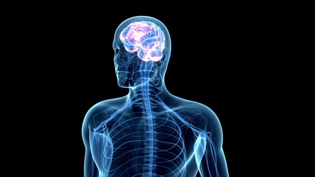 human brain activity - human nervous system stock videos & royalty-free footage