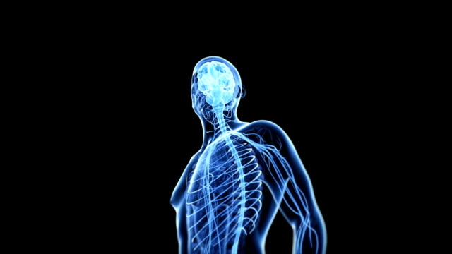 human brain and nerves - human brain stock videos & royalty-free footage
