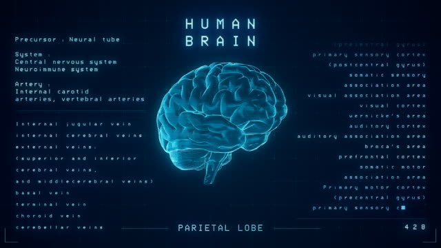 human brain animation - loopable - imitation stock videos & royalty-free footage
