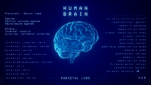 vídeos y material grabado en eventos de stock de animación cerebral humana - loopable - cerebro