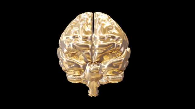 """human brain, animation"" - cerebrum video stock e b–roll"