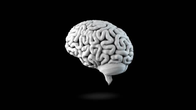 vídeos de stock, filmes e b-roll de laço humano do cérebro - telencéfalo