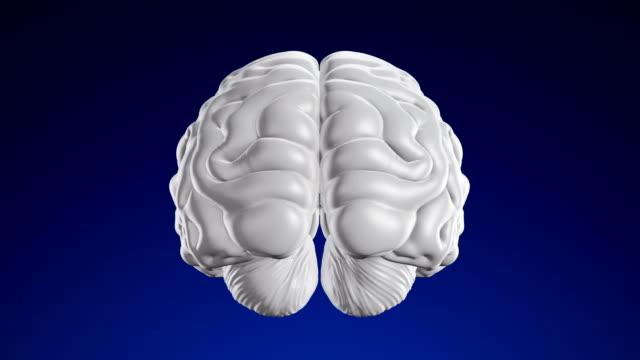 vídeos de stock, filmes e b-roll de cérebro humano - loopable (canal alfa) - 4k - telencéfalo