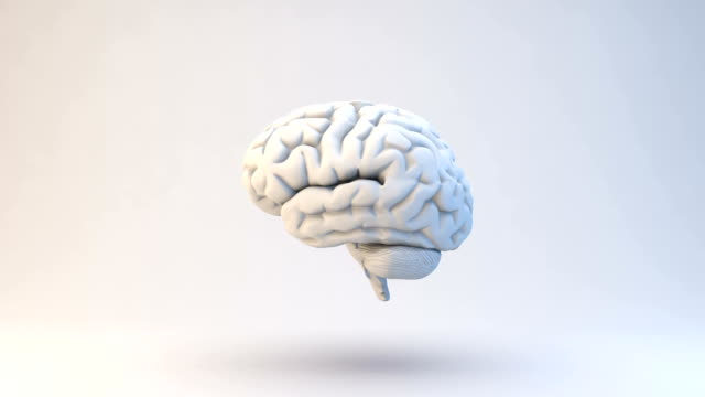 human brain | loopable - three dimensional stock videos & royalty-free footage