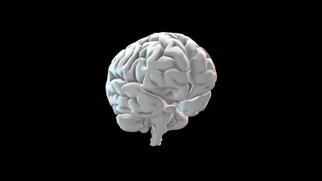 vídeos y material grabado en eventos de stock de cerebro humano - loopable - cerebro
