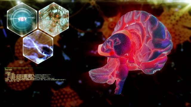 stockvideo's en b-roll-footage met menselijke hersenen neuron scan - thalamus