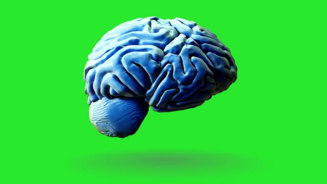 vídeos de stock, filmes e b-roll de cérebro humano em fundo verde - lóbulo frontal