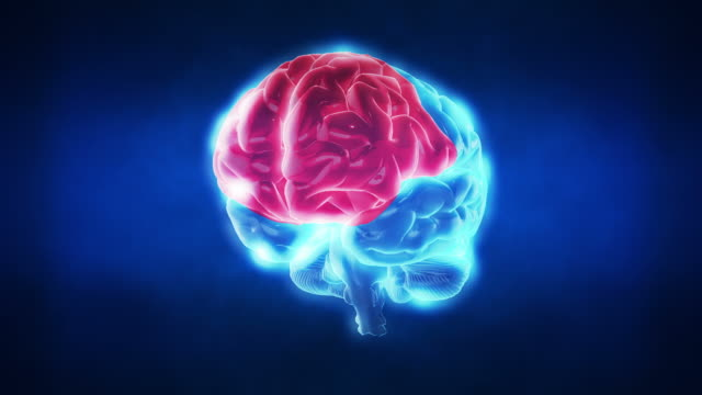 human brain parts | loopable - biomedical animation stock videos & royalty-free footage